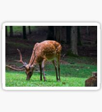Sika Deer Stag Sticker