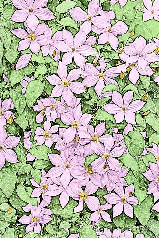 Pink Clematis - coloured line art by Photos by Healy
