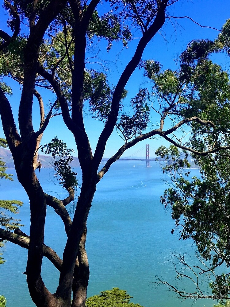 View of the Golden Gate Bridge from Lincoln Park by mariethebee
