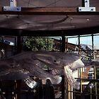 Whale Sculptures,Darling Harbour,NSW,Australia 2002 by muz2142