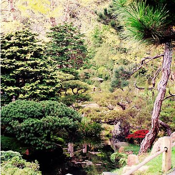 The Japanese Tea Garden in Golden Gate Park by mariethebee