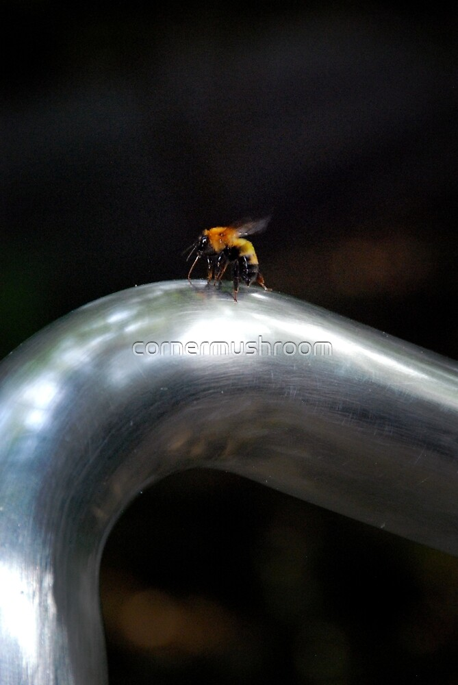 Bee by Cindy Lin