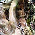 Dryad Eucalypt by Alison Gilbert