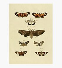 Vintage Moths Photographic Print