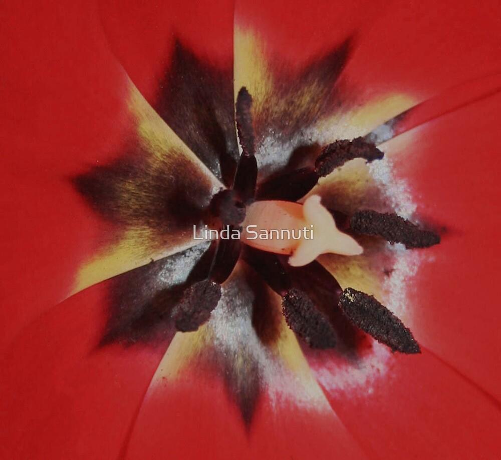 the inside by Linda Sannuti