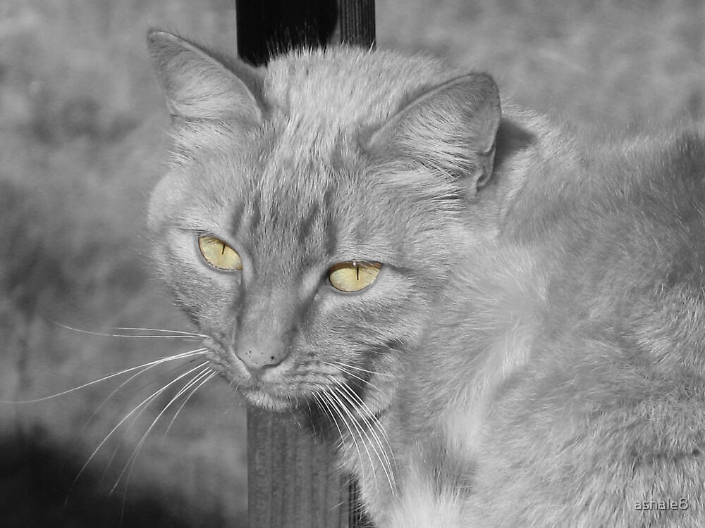 Eyes of the Cat by ashale8