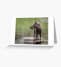 Moose in the water Greeting Card