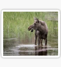 Moose in the water Sticker