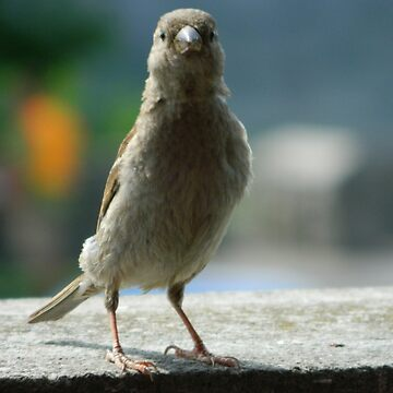 bird by valbuquerque