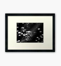 Pond Ripples Framed Print