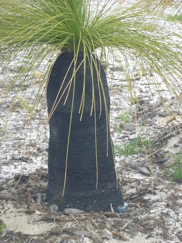 grass tree. by fjsmurfy