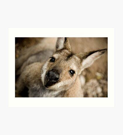 The Inquisitive Kangaroo Art Print