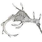 Weedy seadragon ink drawing - Phyllopteryx taeniolatus by John Turnbull