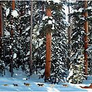 Dog Sled in the Douglas Fir by Wayne King