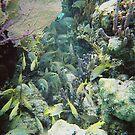 Underwater in Belize by Cathy Jones