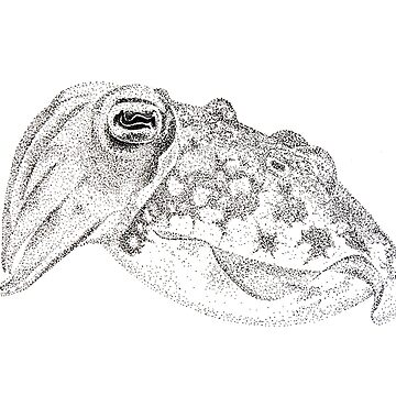 Red cuttlefish ink drawing - Sepia mestus by jwturnbull