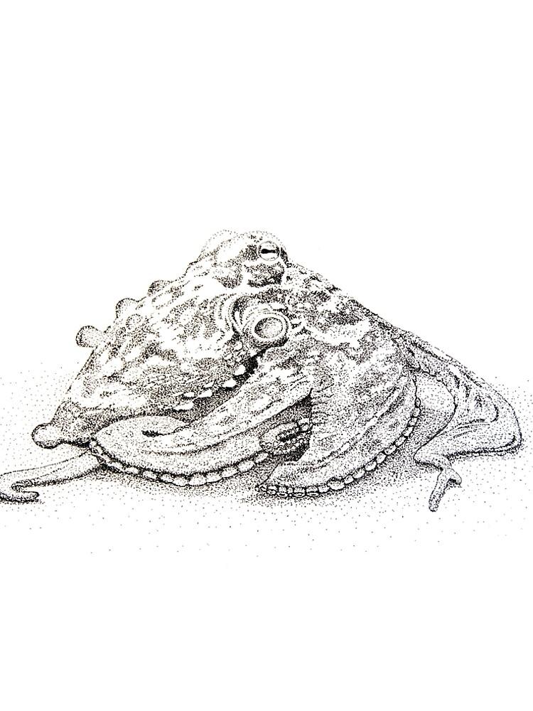 Sydney octopus ink drawing - Octopus tetricus by jwturnbull