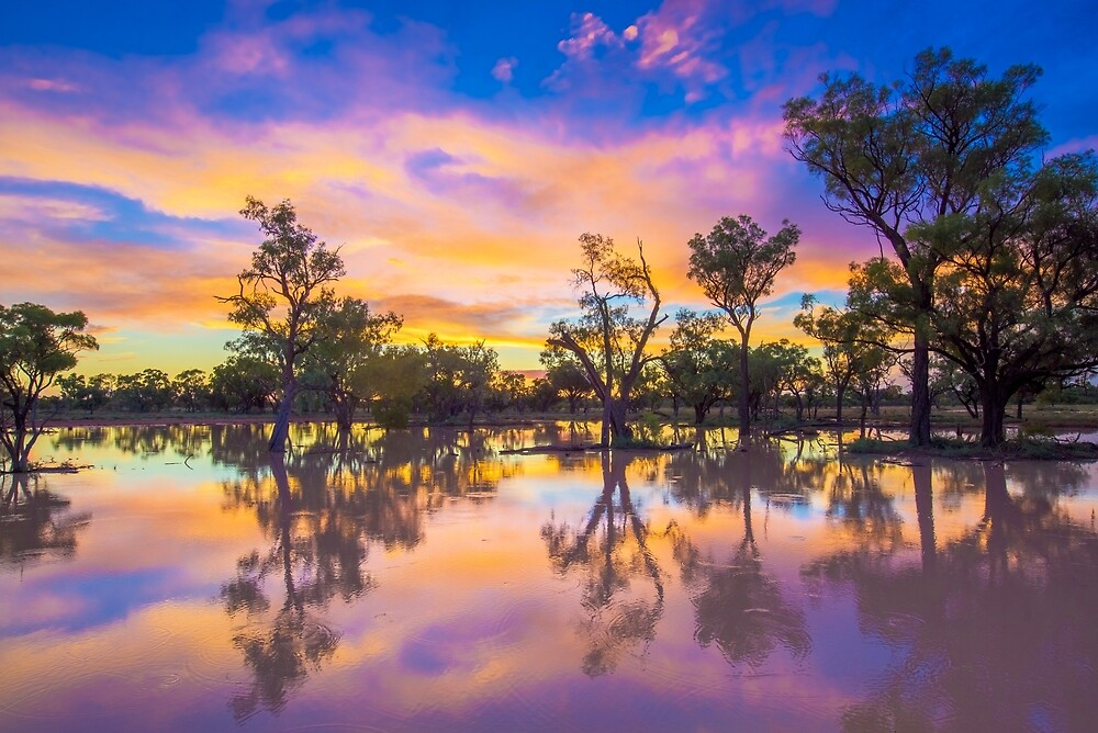 Flooded Gidgee woodland - outback Australia by Bruce  Thomson