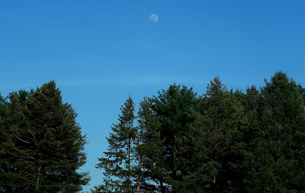 Fly me to the Afternoon moon by Judi Taylor