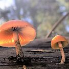 Fungi in the Sun by Judi Rustage