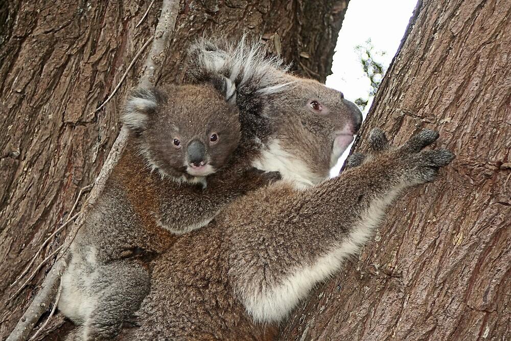 Cute Australian koala mother and baby joey by FranWest