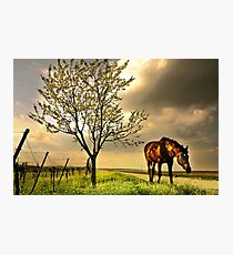 dappled blossoming light  Photographic Print