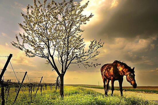 dappled blossoming light  by Dan Shalloe
