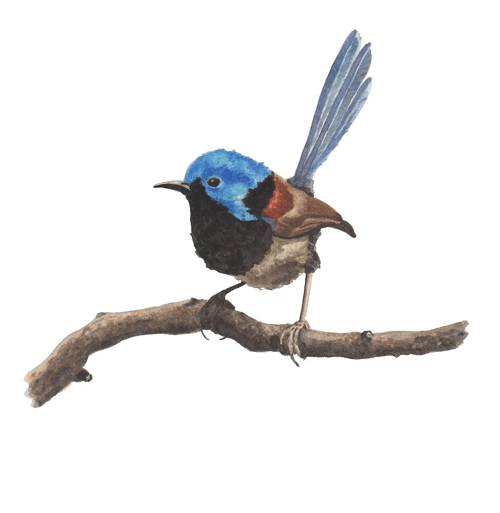 Fairy Wren by Michelle Collier