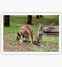 Mother kangaroo and baby joey Sticker