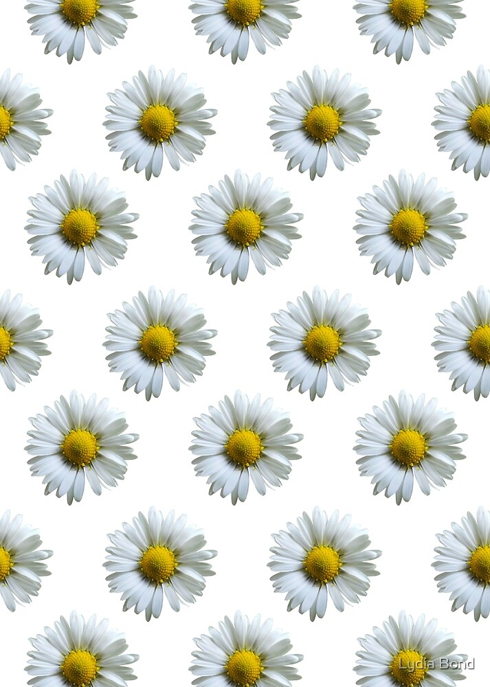 Daisies by Lydia Bond