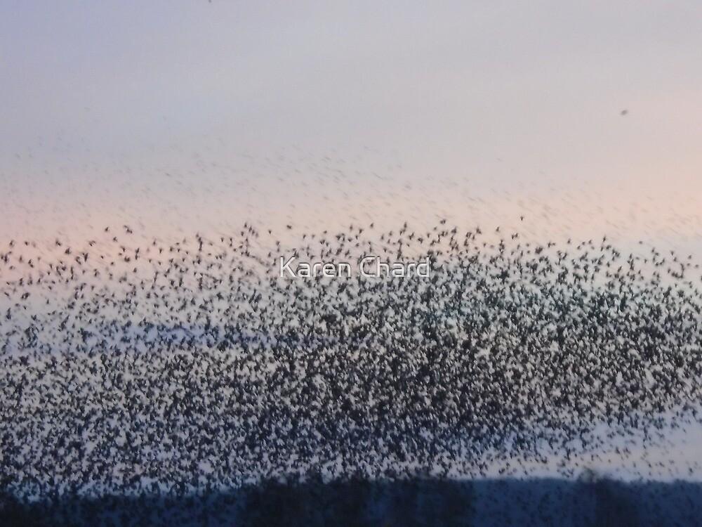 Starling Murmuration by Karen Chard