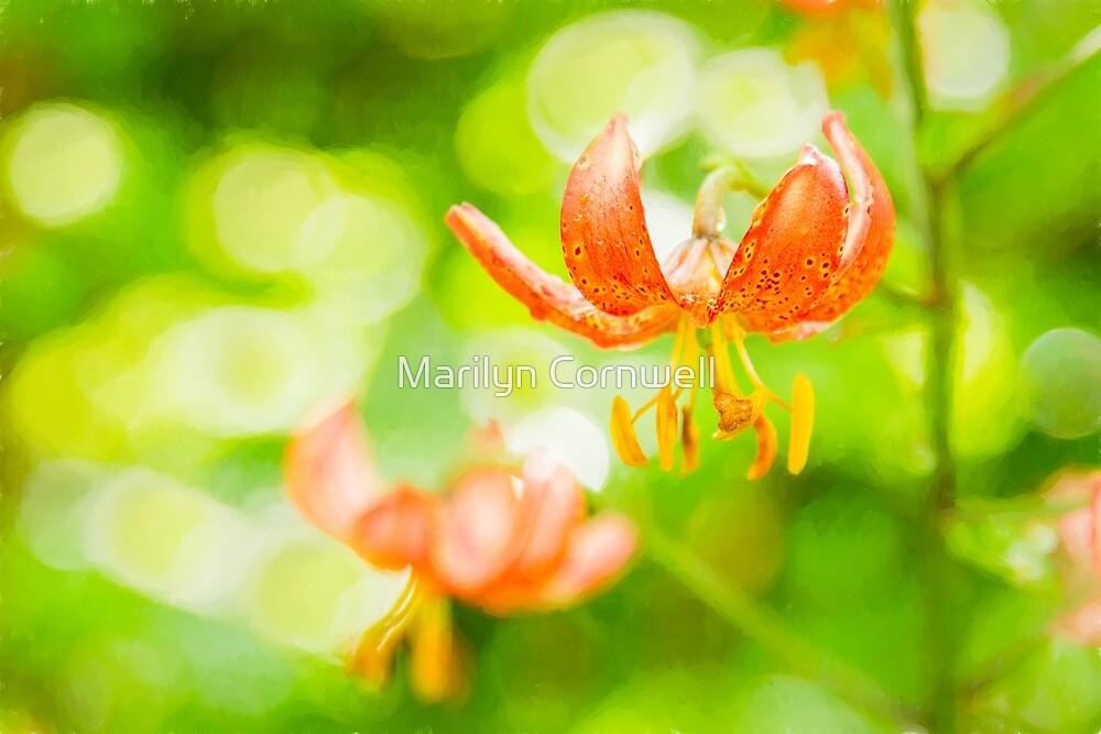 Martagon Lily - June 2017 by Marilyn Cornwell