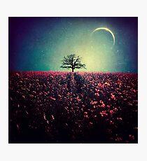 Magic tree vol.3 Photographic Print