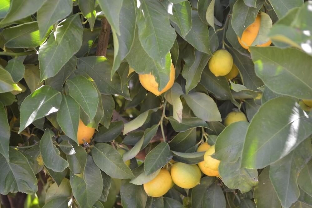Lemon Tree by Kerry LeBoutillier