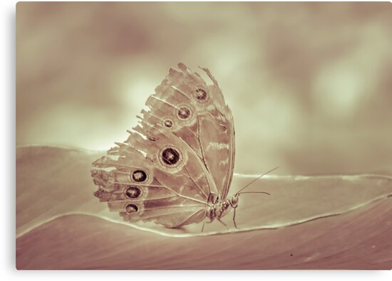 Patterned Wings Butterfly Over Leave by DFLC Prints