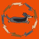 Dachshund circle-Long haired by Diana-Lee Saville