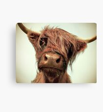 Hairy Coo Canvas Print
