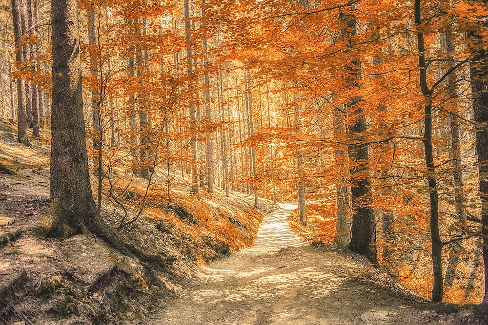 Autumn forest leaves by Layuee