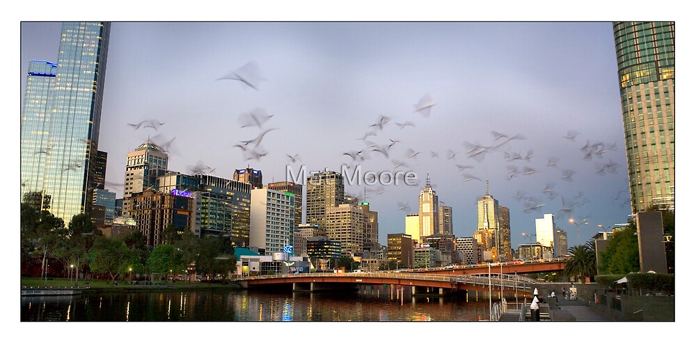 ' Soaring the Yarra ' by Mat Moore