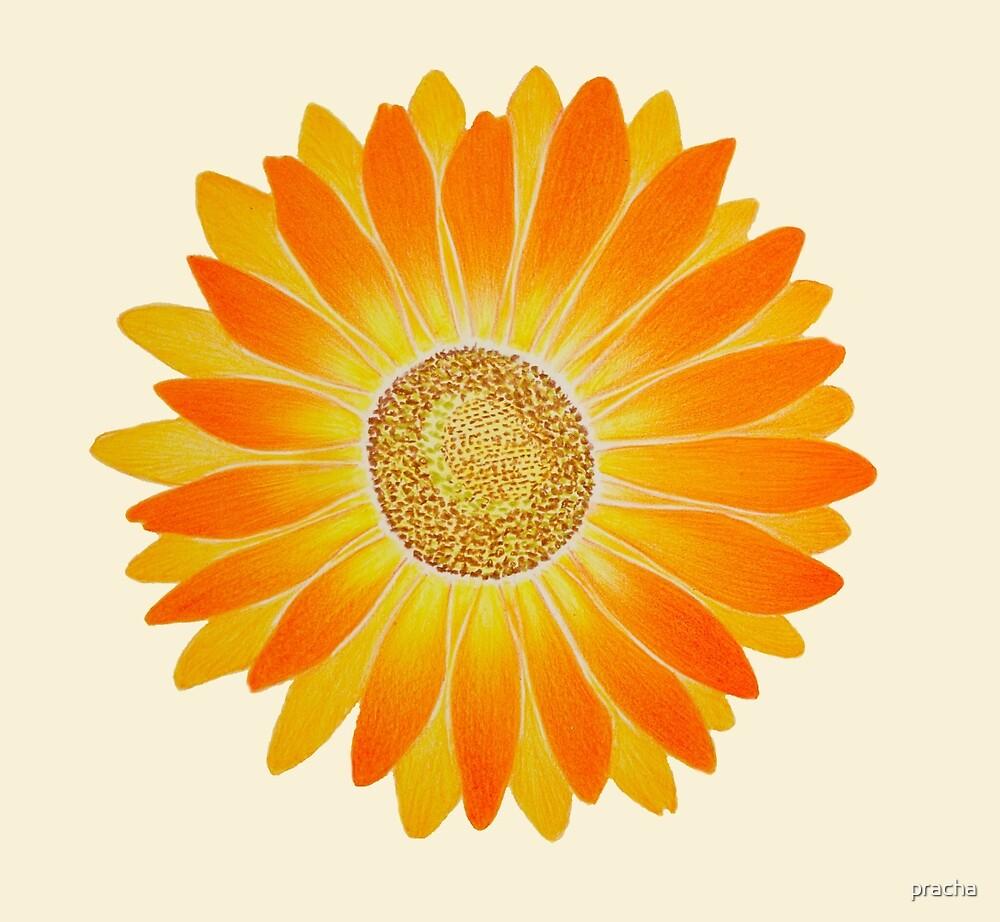 Sun Flower by pracha
