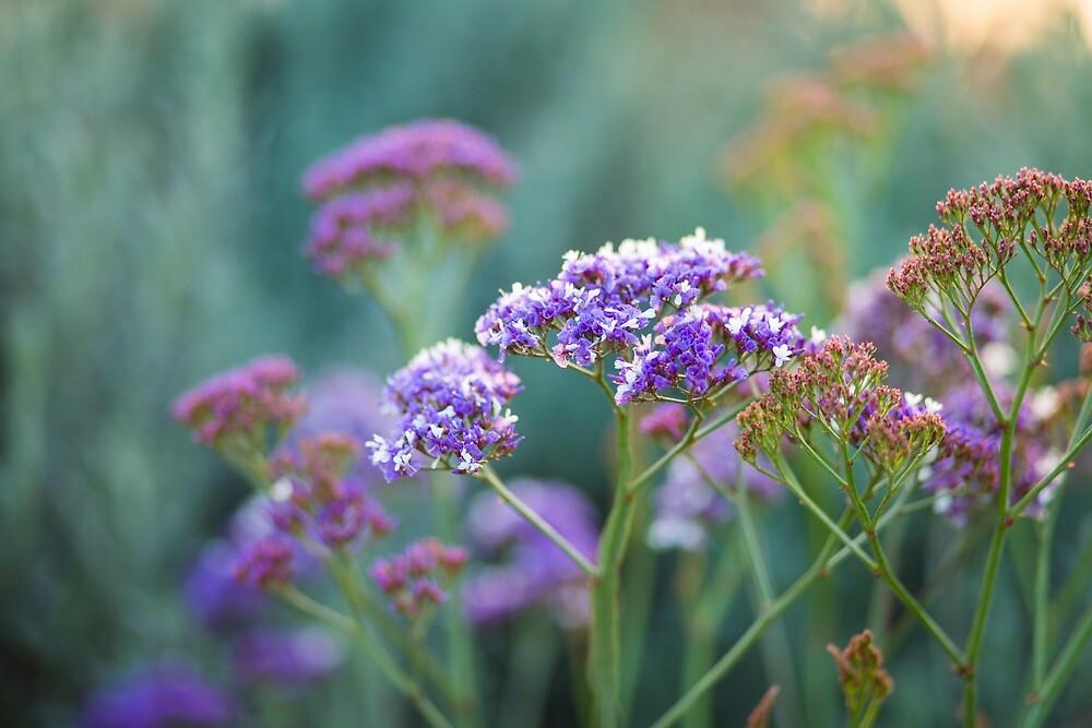 Perez sea lavender by Layuee