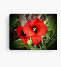 """Beautiful Red Flower"" Canvas Print"