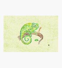 Swirly Chameleon Photographic Print