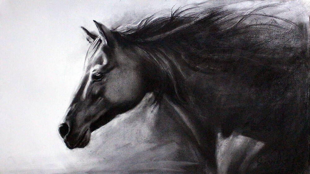 Black Horse by sundeepartist