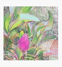 Protea Sketching in Bright Lights Photographic Print