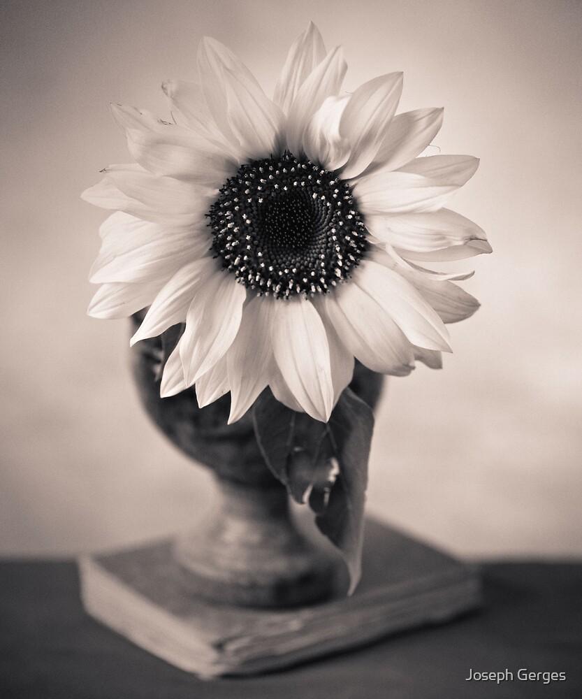 sunflower #4 by Joseph Gerges