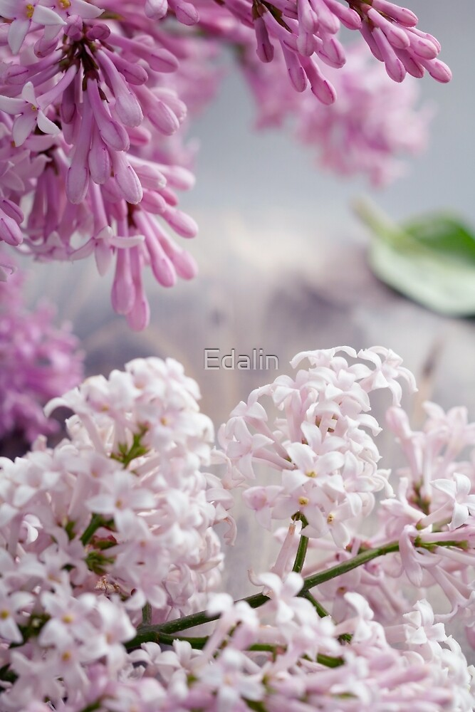 Close-up of lilac flowers on a table. by Edalin