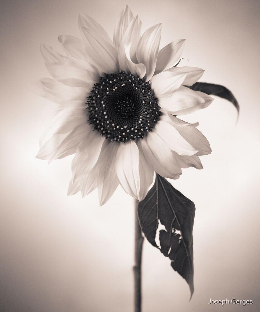 sunflower #3 by Joseph Gerges