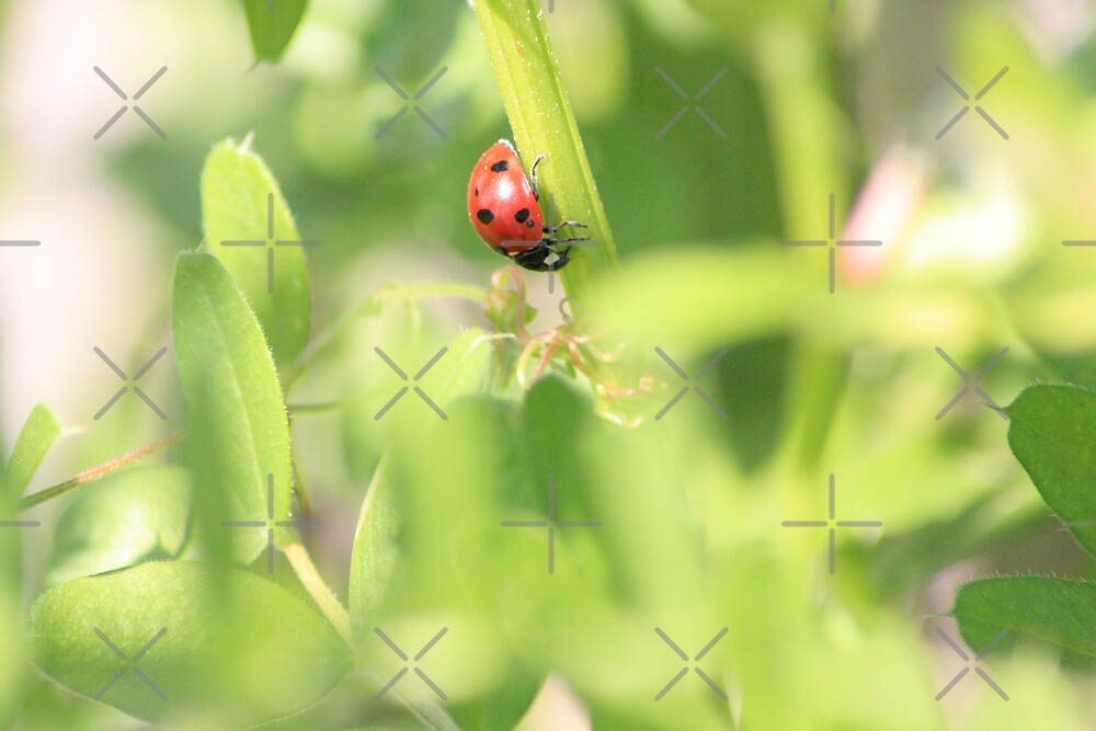 Busy Lady Bug by connie campbell