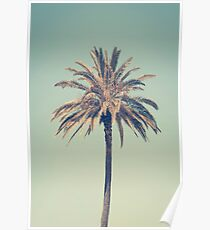 Retro palm tree Poster